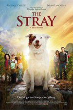 The Stray 123movies