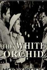 The White Orchid 123movies