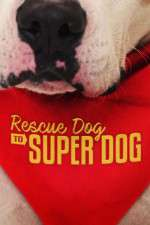 Rescue Dog to Super Dog (US) 123movies