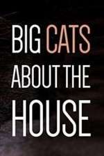 Big Cats About the House 123movies