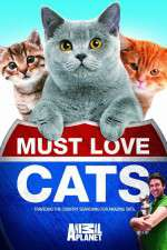 Must Love Cats 123movies